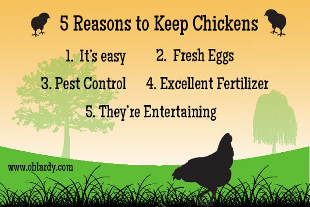 Pin It! A Practical Guide To Keeping Backyard Chickens ...