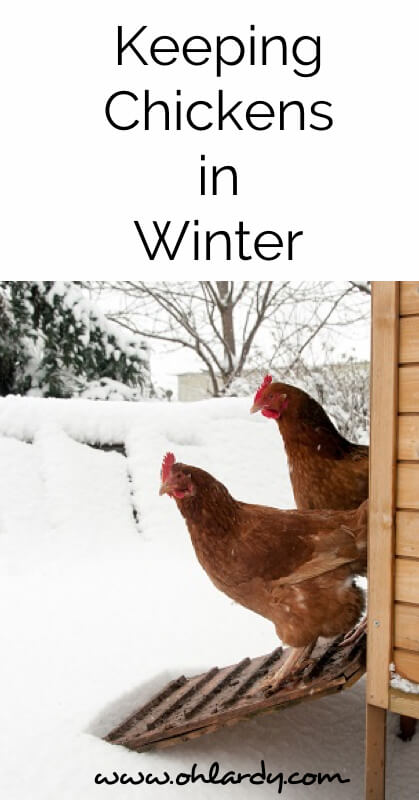 The Definitive Guide to Keeping Chickens in Winter - www.ohlardy.com