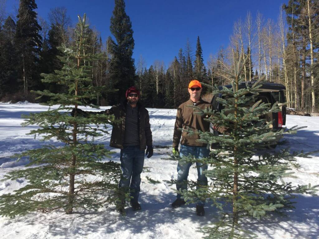 Cutting down our Christmas tree!