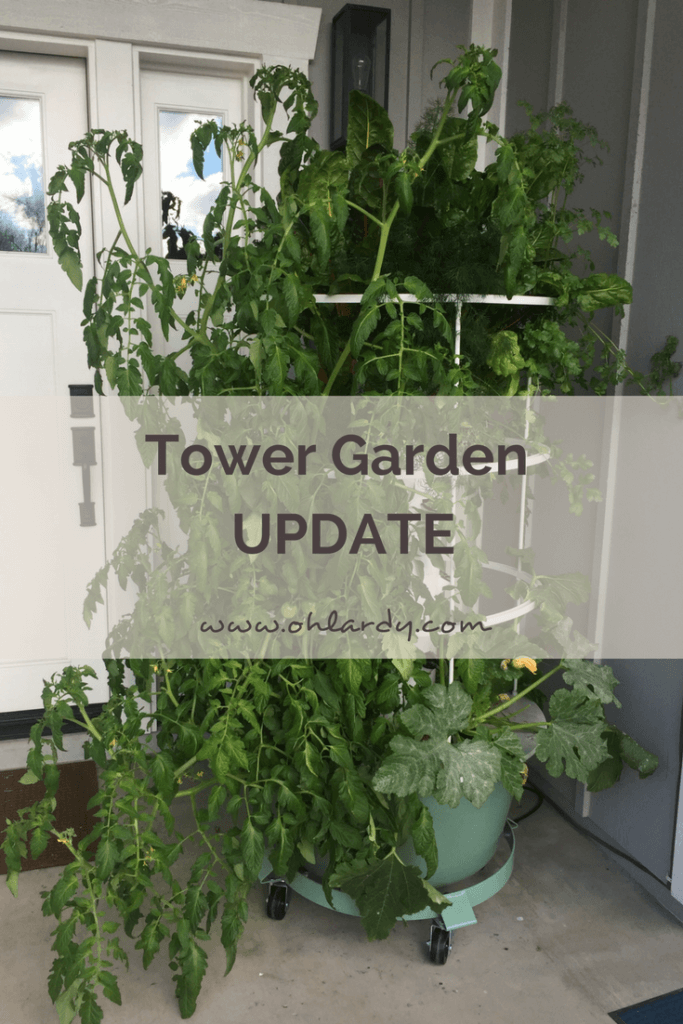 Tower Garden UPDATE - it has been 3 months!