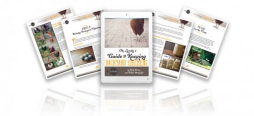 Oh Lardy's Guide to Keeping Backyard Chickens - www.ohlardy.com