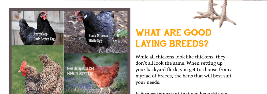 Guide to Backyard Chickens Preview 1