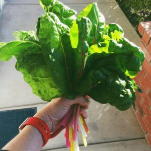 Swiss Chard from my Tower Garden
